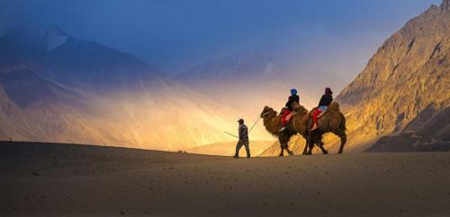 Double Hump Camel safari - Hunder sand dunes - nubra valley
